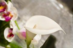 Tropical imitation. Tropical flower with shallof doof Stock Photos