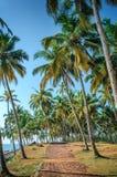 Tropical Indian village  in Varkala, Kerala, India. Tropical Indian village with coconut palm trees near the road and blue ocean in Varkala, Kerala, India Stock Photo