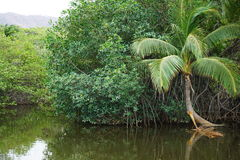 Tropical Inland River, Costa Rica Stock Photography