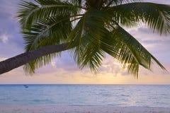 Tropical Island. Medhufushi Island Resort is naturally quiet, serene, authentic Maldivian island stock image