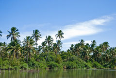 Tropical island. With several palms Royalty Free Stock Photos