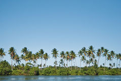 Tropical island. With several palms Royalty Free Stock Images