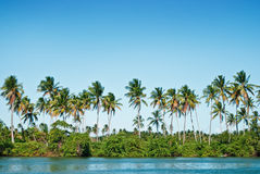 Tropical island. With several palms Stock Images