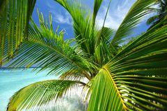 Tropical island Stock Images