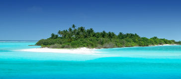 Tropical Island. With Coconut Palmtrees Stock Image
