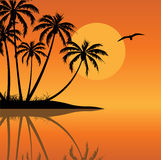 Tropical Island. A tropical island with sun and bird Royalty Free Stock Photography
