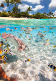 Tropical island above and underwater Stock Image