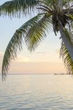 Caribbean Sunrise Palms Background. Tropical island background of palm trees at sunrise in the Caribbean Stock Image