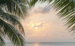 Caribbean Sunrise Palms Background. Tropical island background of palm trees at sunrise in the Caribbean Royalty Free Stock Image