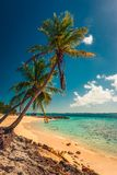 Tropical island in Bahamas. View on the beach with palm tree. Vacation destination stock image