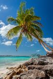 Tropical island in Bahamas. View on the beach with palm tree. Vacation destination royalty free stock photos
