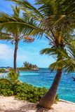 Tropical island in Bahamas. View on the beach with palm tree. Vacation destination stock photography