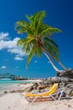 Tropical island in Bahamas. View on the beach with palm tree. Vacation destination stock photos