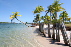 Tropical Island Beach in Brazil Stock Photos