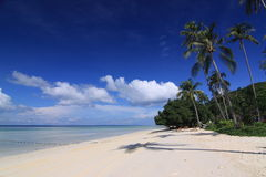 Tropical island beach with coconut tree Stock Photo