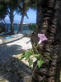tropical island beach garden sabang Stock Photography