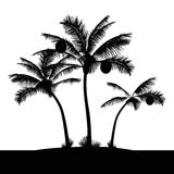 Tropical island beach palm trees Royalty Free Stock Photo