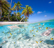 Tropical island. Beautiful tropical island in French Polynesia under and above water Stock Photos