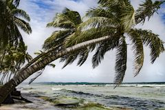 Tropical island with bowed palms, stormy weather, Caribbean sea, Panama royalty free stock photography