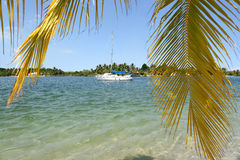 Tropical Island in Brazil Stock Image