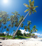 Tropical island with coconut groves Stock Photos