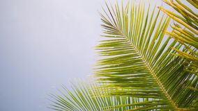 Tropical Island Coconut Palm Leaves Against Blue Sky and Sun Rays. 4K. Thailand. Tropical Island Coconut Palm Leaves Against Blue Sky and Sun Rays. 4K. Thailand stock video footage