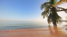 Tropical island with coconut palm tree. Golden sunrise and caribbean sea. Tropical island with coconut palm trees. Golden sunrise and beautiful sescape stock video