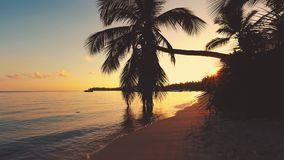 Tropical island with coconut palm trees. Golden sunrise and beautiful sescape. stock footage