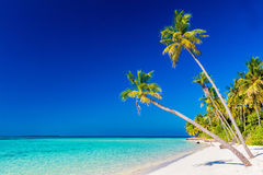 Tropical island with coconut palm trees on sandy beach. Maldives Royalty Free Stock Photo