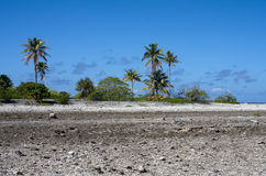 Tropical island. Coral fields and palm trees Royalty Free Stock Images