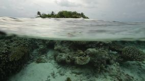 Tropical Island and Coral Reef Underwater Life stock video