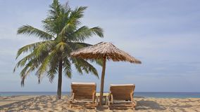 Tropical island exotic beach, coconut palm tree, wooden sunbeds, reed umbrella stock video