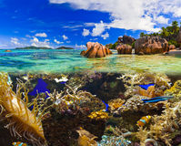 Tropical island and fishes Stock Photography