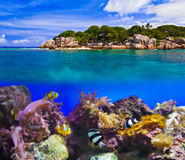 Tropical island and fishes Royalty Free Stock Images