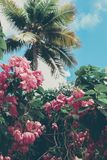 Tropical island flowers, palms, and blue sky royalty free stock images