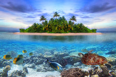 Tropical island of Maldives. With underwater life