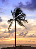 Tropical Stock Image