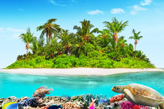 Tropical island in Ocean and beautiful underwater world. Royalty Free Stock Image