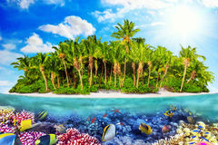 Tropical island in Ocean and beautiful underwater world. Stock Image