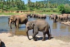 Tropical island in the ocean of Sri Lanka Royalty Free Stock Image