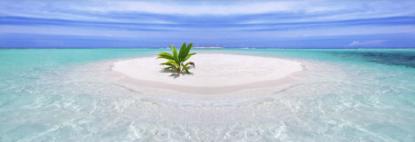 Tropical island with palm Stock Image