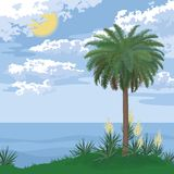 Tropical island with palm and flowers Royalty Free Stock Photography