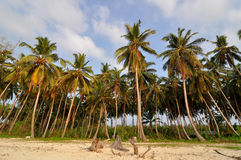 Tropical Island palm trees Royalty Free Stock Image