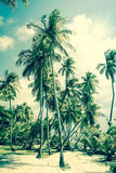 Tropical Island with palm trees Stock Image
