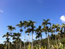 Tropical island. Palm trees land Royalty Free Stock Photography
