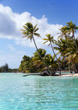 The tropical island with palm trees in the sea. The tropical island with palm trees in sea Stock Photo