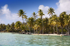 The tropical island with palm trees in  sea Royalty Free Stock Photo