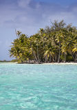 The tropical island with palm trees in the sea. The tropical island with palm trees in  sea Royalty Free Stock Image