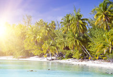 The tropical island with palm trees in the sea Royalty Free Stock Image