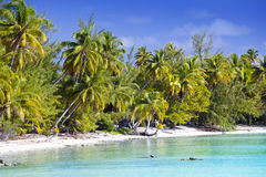The tropical island with palm trees in the sea Royalty Free Stock Photo